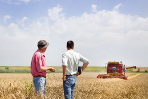 39695124 - peasant and business man talking on wheat field during wheat harvest